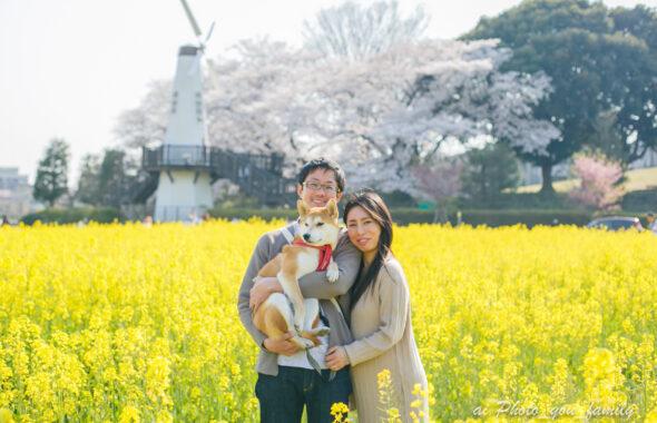 ペットと桜と菜の花と一緒に残すマタニティフォト|見晴公園